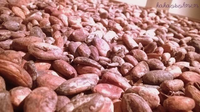 hamburg-chocoversum-hachez-kakaobohnen