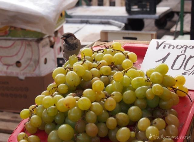 Ein Vogel sitzt auf Weintrauben auf dem Zentralmarkt in Riga