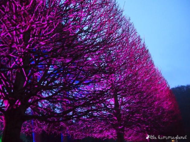 schlossleuchten baeume pink