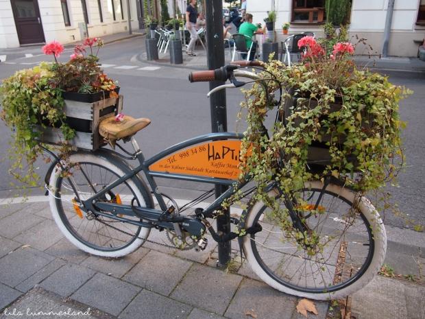 haptilu-köln-südstadt-fahrrad